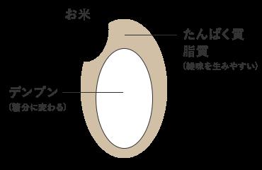 米は中心にデンプンが多く含まれている