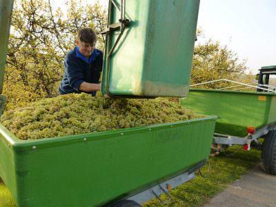 ワインの生産者