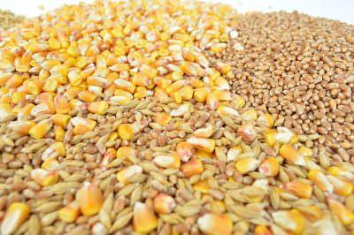 トウモロコシ、小麦、ライ麦などのグレーン