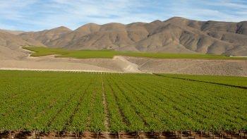 チリの大規模ブドウ畑