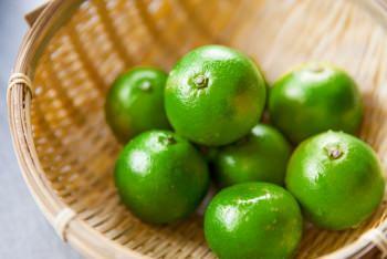 辺塚だいだいは鹿児島の一部地域に自生する和柑橘