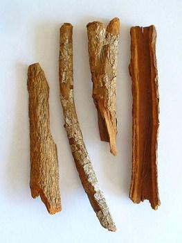 キニーネの元となるキナの樹皮
