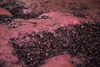 赤ワインの発酵の様子。