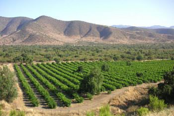 チリのワイン畑