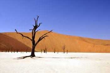 脱水状態を連想させる砂漠