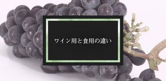 ワイン用のブドウと食べるブドウは違うって知ってた?違いを簡単解説