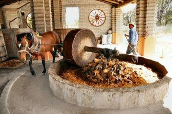 伝統の製法を守り続けたメスカル。未だに馬の力を借りて搾汁しているところがほとんど。