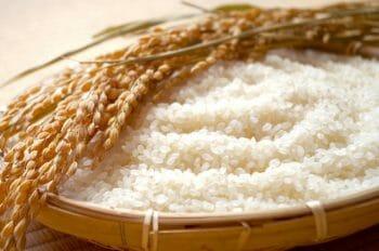 日本酒と米焼酎、ともに原料は米と米麹。