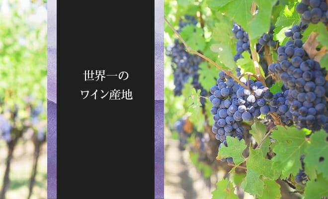 世界一のワイン産地ってどこ?世界の産地と生産量をまとめてみた