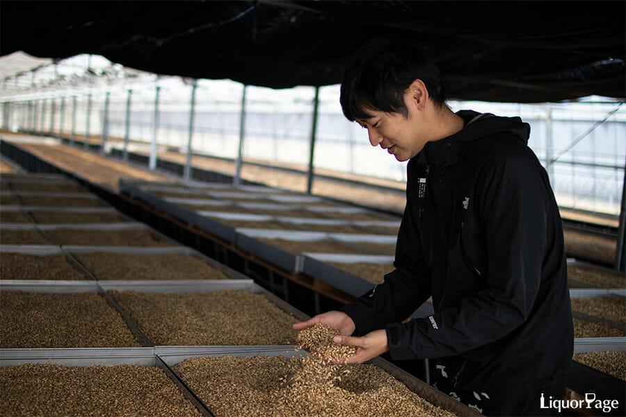 黒木本店(尾鈴山蒸留所)のウイスキー造りに使う大麦麦芽